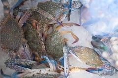 Синий краб для продажи на рынке Стоковая Фотография