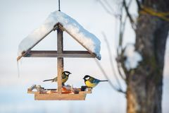 Синица 2 в снежном фидере птицы зимы Стоковые Фото