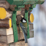 Синица на деревянном доме Стоковое фото RF