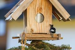 Синица угля есть семена пеньки на деревянном фидере птицы в wint Стоковые Фотографии RF