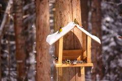 Синицы и птицы клюют семена в фидере птицы в лесе Стоковое Изображение RF