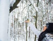Синицы летают к руке woman's в лесе зимы снежном Стоковое Фото