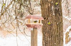 Синицы на дереве и в фидере птицы в зиме Стоковые Фото