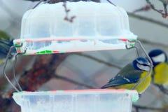 Синицы на подавать-шкафе ищут birdseed стоковая фотография rf