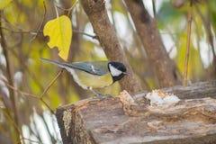 Синицы, робин и titmouse воробья голубые на ветви дерева на кормушке Стоковое Изображение