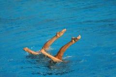 синхронизированное заплывание Стоковое фото RF