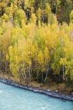 Синцзян, фарфор: листво осени Стоковое Изображение
