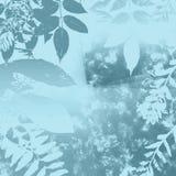 синь выходит зима Стоковая Фотография