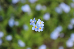 Синь лета Стоковое Фото