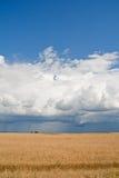 синь изменяя переднее whea погоды грома неба Стоковое Изображение
