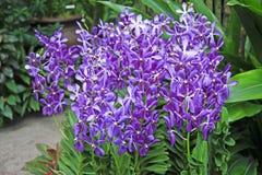 Синь и покрашенная белизной тропическая орхидея Стоковое фото RF