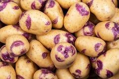 Синь картошки красивая стоковая фотография