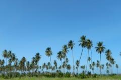 синь над небом ладони Стоковое Изображение