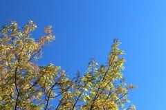 синь осени красит желтый цвет зеленого клена померанцовый стоковая фотография rf