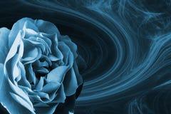 синь подняла Стоковые Изображения RF