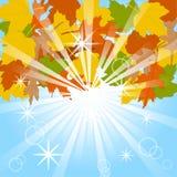 синь предпосылки осени выходит небо Стоковые Фото