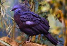 синь птицы Стоковое фото RF