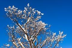 синь разветвляет зима вала снежка неба Стоковое фото RF