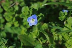 синь цветет зеленый цвет травы стоковое изображение