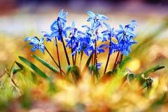 Синь цветет черный макрос предпосылки Стоковая Фотография
