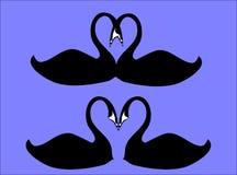 синь целуя лебедей Стоковые Фотографии RF