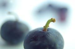 синь ягоды Стоковая Фотография