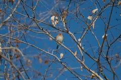 Синяя птица и голубое небо Стоковое Изображение