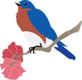 Синяя птица на ветви азалии стоковые изображения