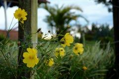 Син в небе, белизнах и зеленых цветах и цветках слишком Стоковая Фотография