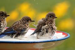 Син младенца в бассейне пташки Стоковое фото RF