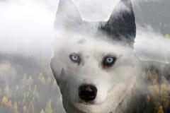 Сиплая собака стоковые изображения