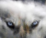 Сиплая собака лес стоковая фотография