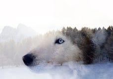 Сиплая собака лес стоковое изображение