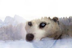 Сиплая собака лес стоковое изображение rf
