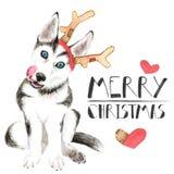 Сиплый щенок в шляпе Санта Клауса Собака в рожках оленя белизна изолированная предпосылкой небо klaus santa заморозка рождества к иллюстрация штока