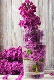 Сирени в мае в вазе Стоковая Фотография