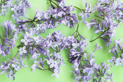Сирени на зеленом цвете Стоковые Изображения