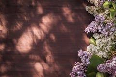 Сирень бела и сирени Стоковое Изображение RF