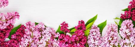 Сирень весны знамени сети цветет на белой деревянной предпосылке Взгляд сверху, плоское положение, spase экземпляра Стоковое Фото