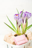Сирень весны и фиолетовый крокус в цветочном горшке листья зеленого цвета гиацинты зеленого цвета карточки предпосылки выходят ли Стоковые Изображения RF