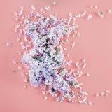 Сирень цветет взгляд сверху положения квартиры розовой предпосылки минимальное флористическое Стоковые Фото