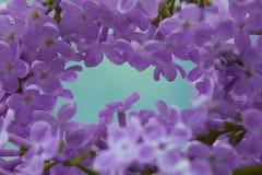 Сирень цветет предпосылка макроса Стоковые Фотографии RF