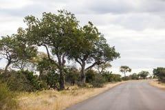 Сиротливая дорога без автомобилей в парке Kruger, Южной Африке стоковое изображение