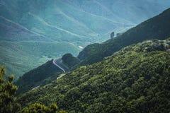 Сиротливая дорога в лесе горы стоковые фото