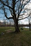 Сиротливая женщина сидя на стенде в парке думая о жизни смотря горизон стоковые фото