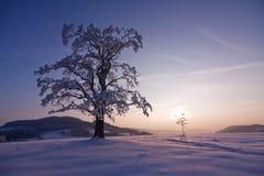 сиротливая зима вала Стоковое Изображение RF