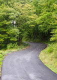 Сиротливая изогнутая дорога с лиством Стоковые Изображения