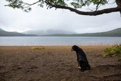 Сиротливая и унылая собака ждать его мастера Стоковые Фотографии RF