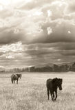 Сиротливая лошадь Стоковое Фото