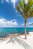 сиротливая пальма Стоковое Изображение RF